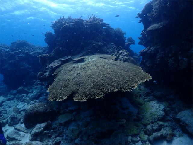 沖縄 ウミガメ
