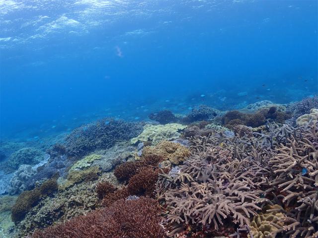 沖縄 ダイビング 宜野湾 体験ダイビング