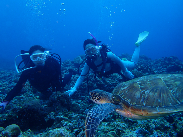 沖縄 慶良間 ダイビング