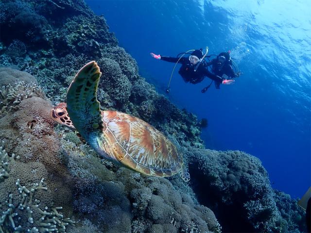 沖縄 ダイビング 慶良間 FUNダイビング ライセンス講習