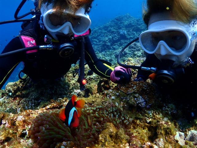 沖縄 慶良間 体験ダイビング