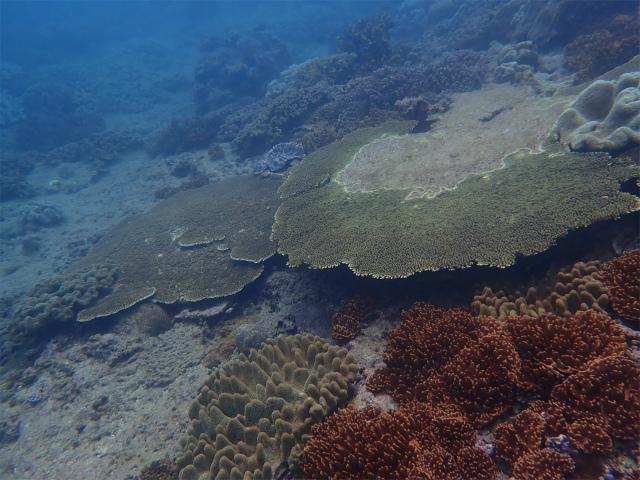 沖縄 ダイビング 慶良間 FUNダイビング 本島近海