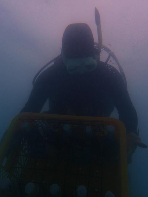 沖縄 泡盛 ダイビング