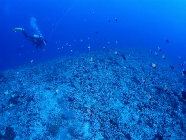 沖縄 ダイビング 慶良間 ドリフト