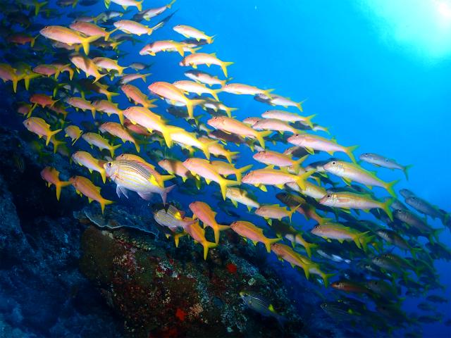 海 ダイビング 沖縄