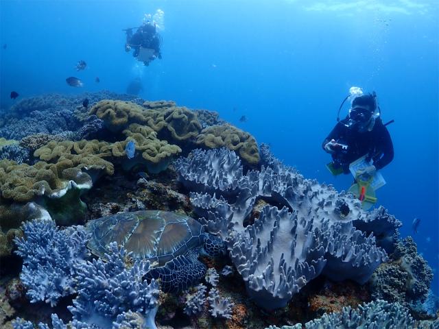 沖縄 ダイビング リーフチェック