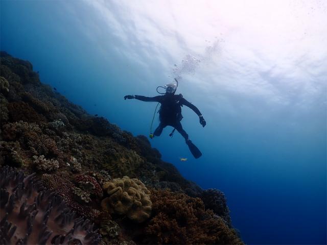 沖縄 ダイビング 観光 絶景