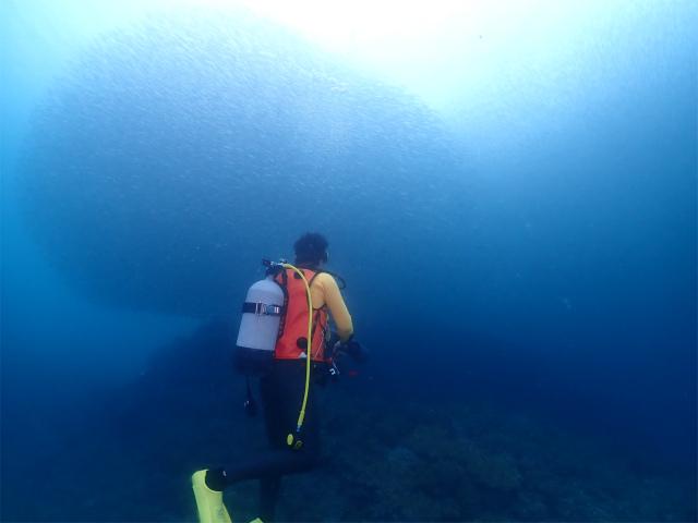 沖縄 海 観光 潜る