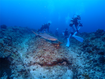 ダイビング 沖縄 オススメ 海