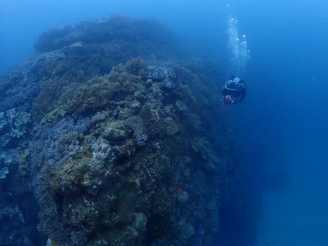 砂辺 海 ダイビング オススメ