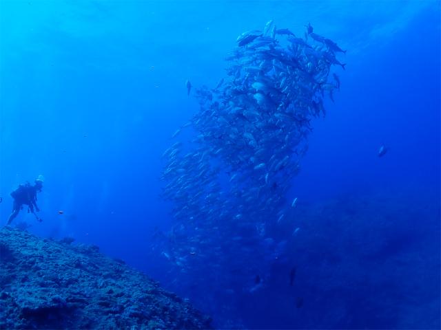 粟国 ドリフト 沖縄 ダイビング