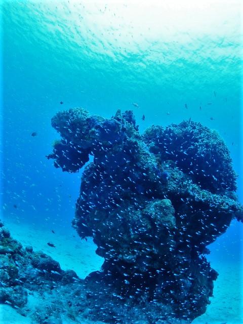沖縄 ダイビング ケラマ FUNダイビング
