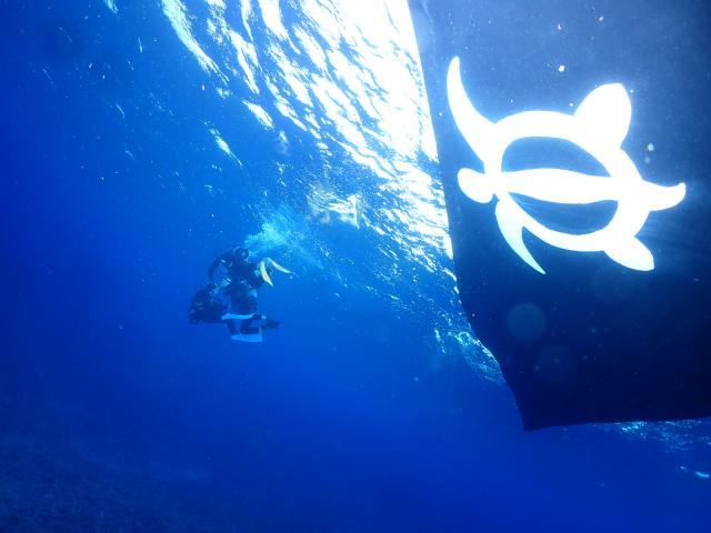海 ダイビング ケラマ 沖縄