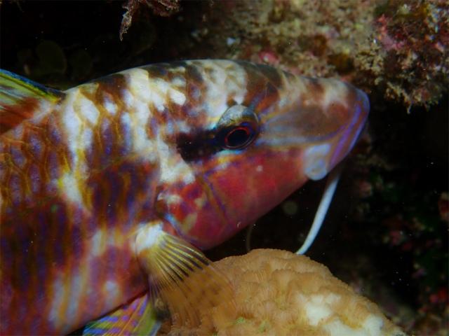 海 オジサン 沖縄 サンゴ