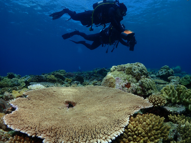 沖縄 ダイビング 海 絶景