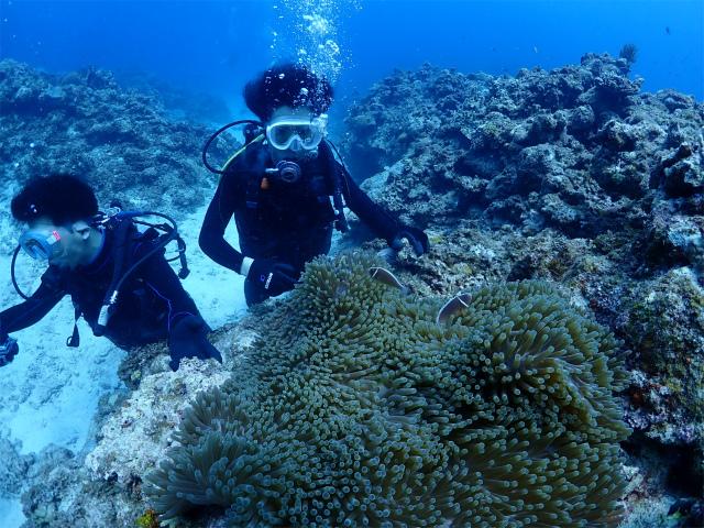 海 沖縄 絶景 ダイビング