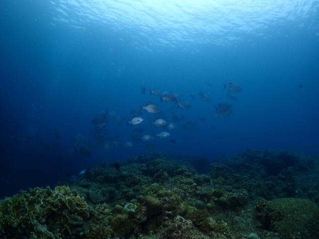 海 観光 沖縄 景色
