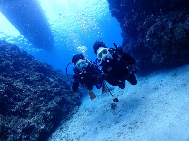 海 慶良間 ダイビング 沖縄