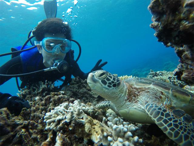海 沖縄 慶良間 ダイビング
