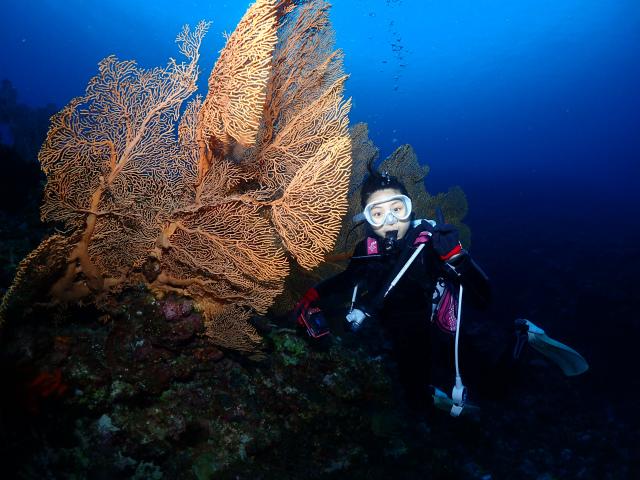 沖縄 ダイビング 慶良間 ウミガメ 体験ダイビング