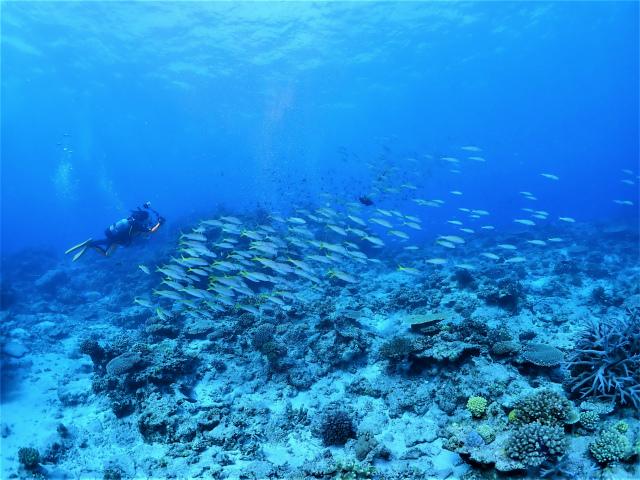 チービシ 沖縄 旅行 無人島
