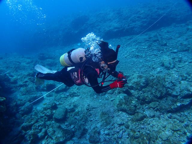 海 慶良間 沖縄 ダイビング 旅行