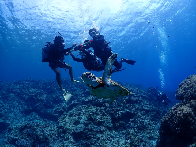 海 慶良間 沖縄 景色 ダイビング