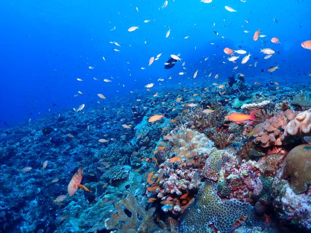 海 慶良間 ウミガメ ダイビング