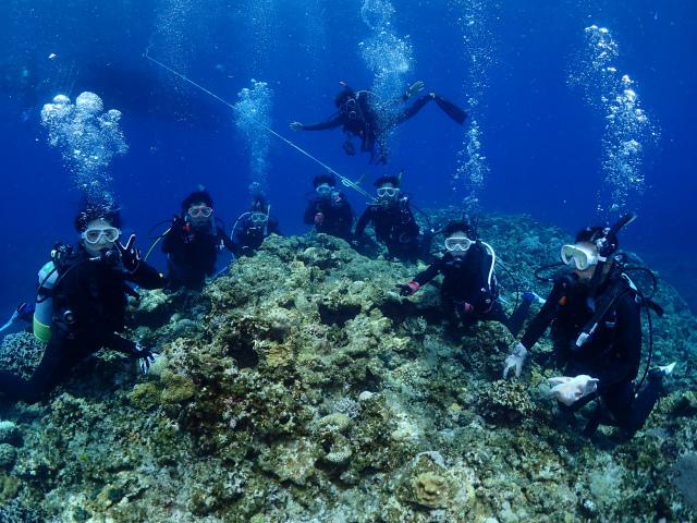 海 慶良間 ダイビング 観光
