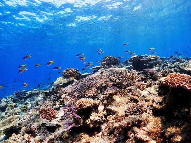 沖縄 ダイビング 慶良間 AOW講習 体験ダイビング