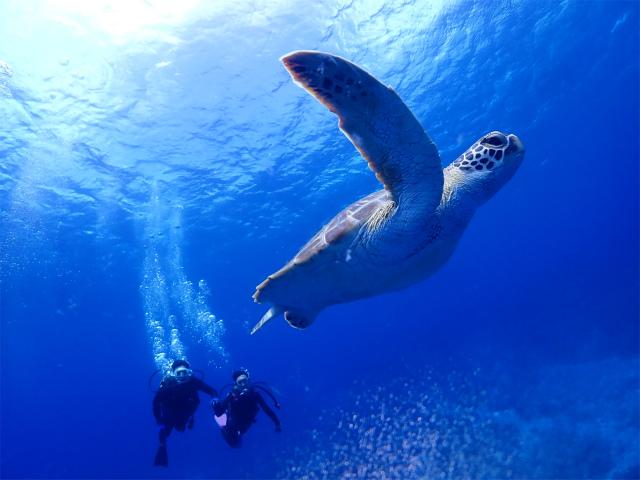 慶良間 海 観光 ダイビング 沖縄