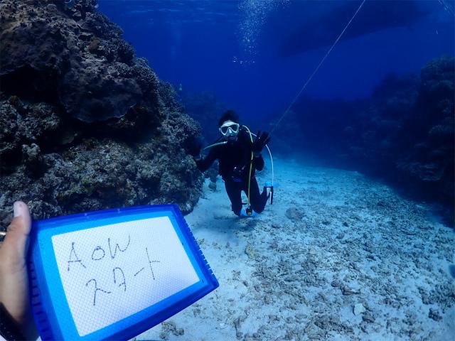 慶良間 万座 ダイビング 沖縄 観光