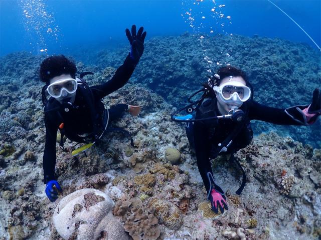 慶良間 ウミガメ 沖縄 観光 ダイビング
