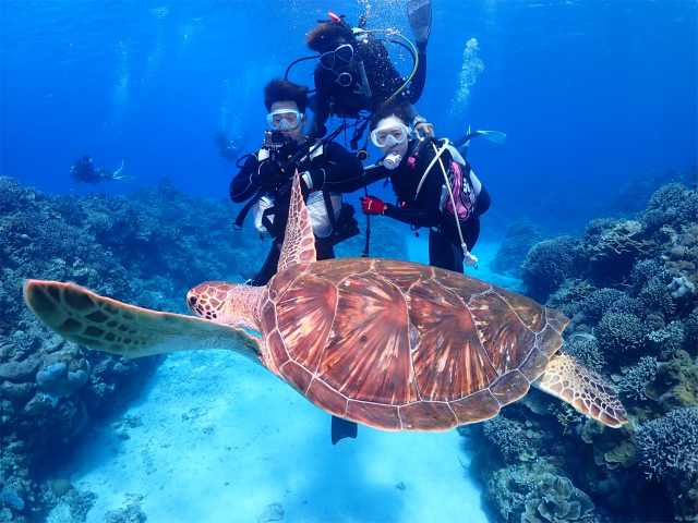 慶良間 海 ダイビング 沖縄