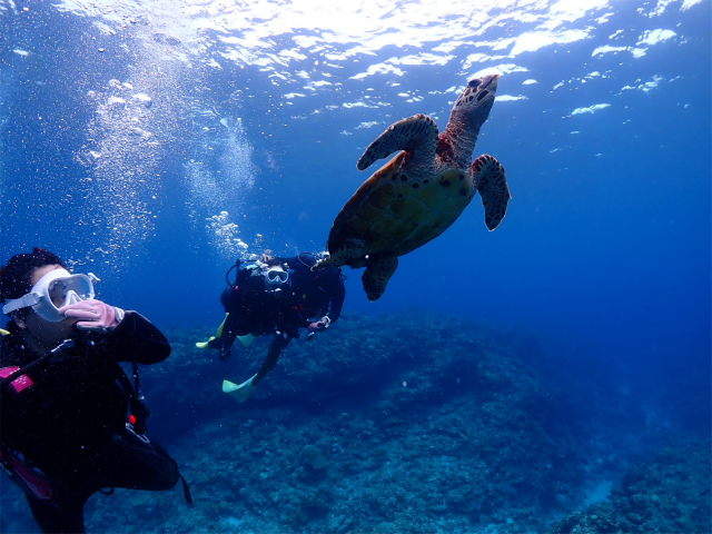 慶良間 ダイビング 沖縄 観光