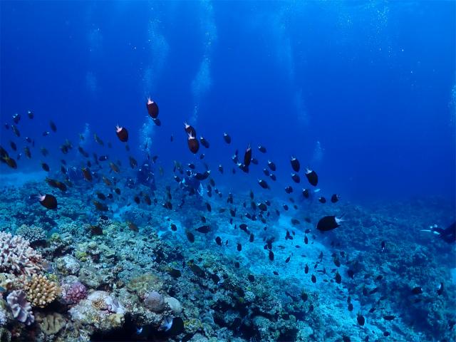 慶良間 ダイビング 海 沖縄 観光