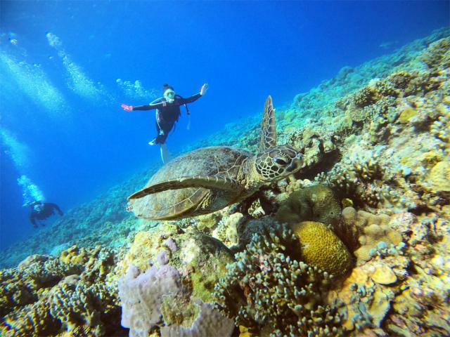 ダイビング 沖縄 慶良間 海 体験