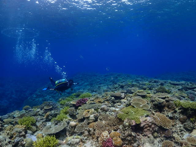 沖縄 ダイビング 慶良間 体験ダイビング FUNダイビング ウミガメ