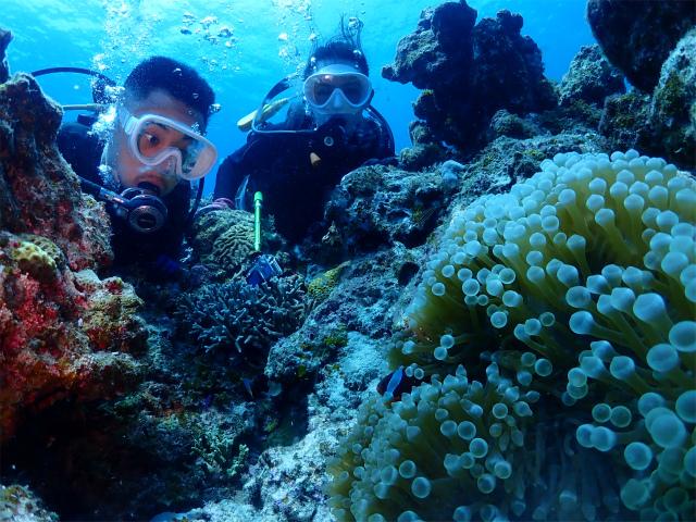 沖縄 観光 慶良間 口コミ ダイビング
