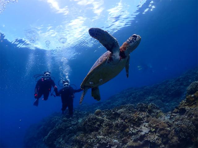慶良間 ダイビング 沖縄 観光 海
