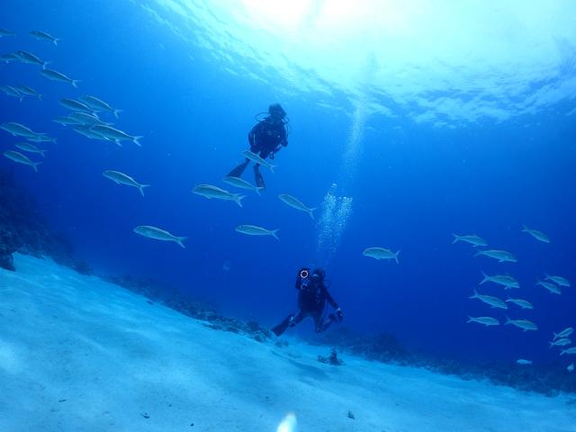 慶良間 ダイビング 海 観光 沖縄