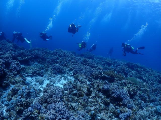 慶良間 体験 FUN ダイビング 沖縄