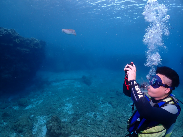 北部 ダイビング 沖縄 観光 体験