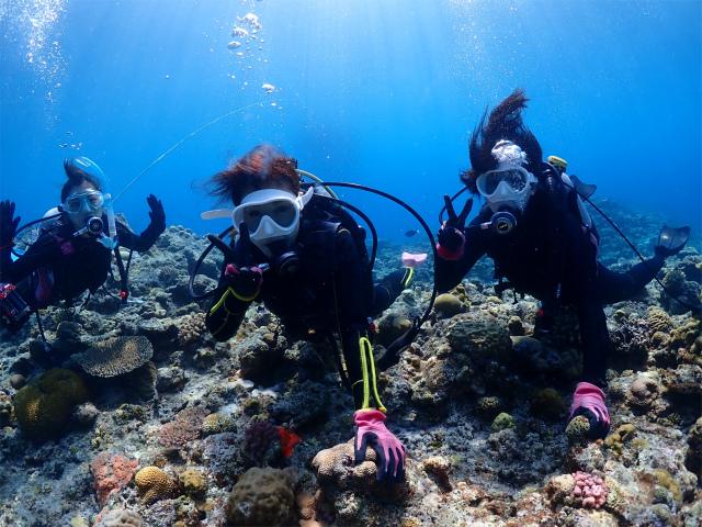 慶良間 体験 ダイビング 沖縄