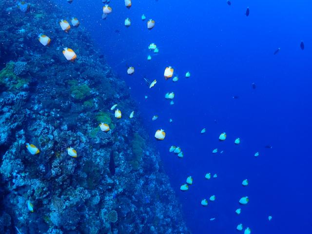 渡名喜 慶良間 海 ダイビング 沖縄
