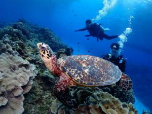 慶良間 体験 沖縄 観光 ダイビング