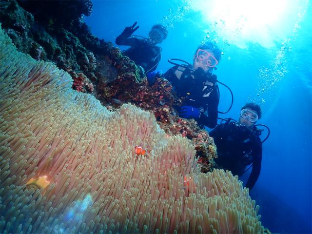 慶良間 ダイビング ウミガメ ニモ 沖縄