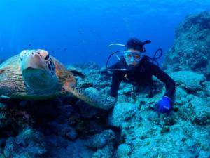 ウミガメ ダイビング 沖縄 観光 慶良間