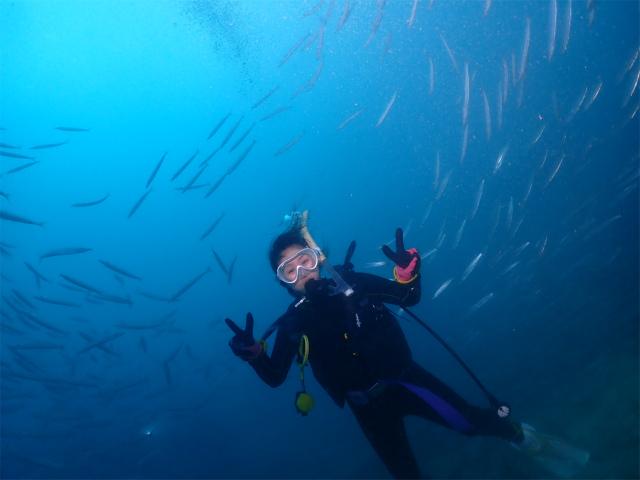 慶良間 沖縄 近海 ダイビング 冬