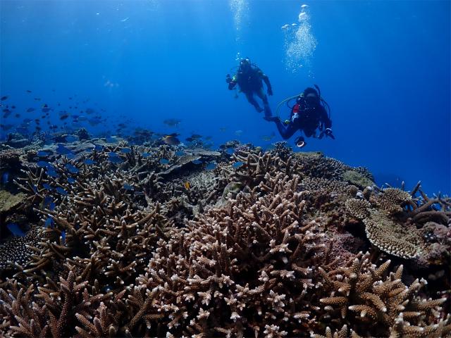さんちん サンゴ